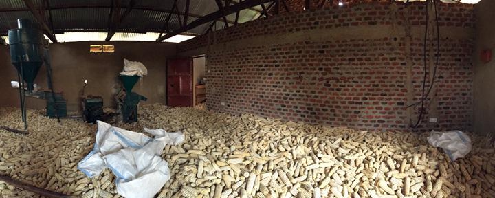 mill-corn-whole